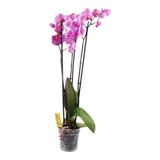 orchidee bloemenboutique botanica. Black Bedroom Furniture Sets. Home Design Ideas