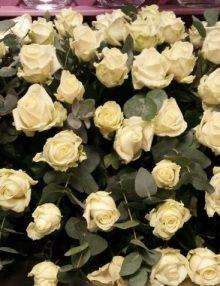 witte-rozen